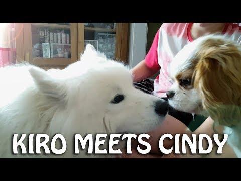 Kiro meets Cindy