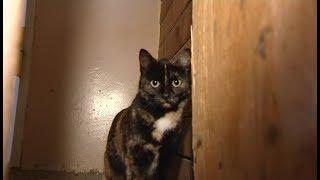 Друг семьи. «Трехцветная кошка»
