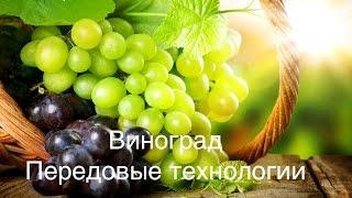 видео: Виноград, передовые технологии Михаил Павливский