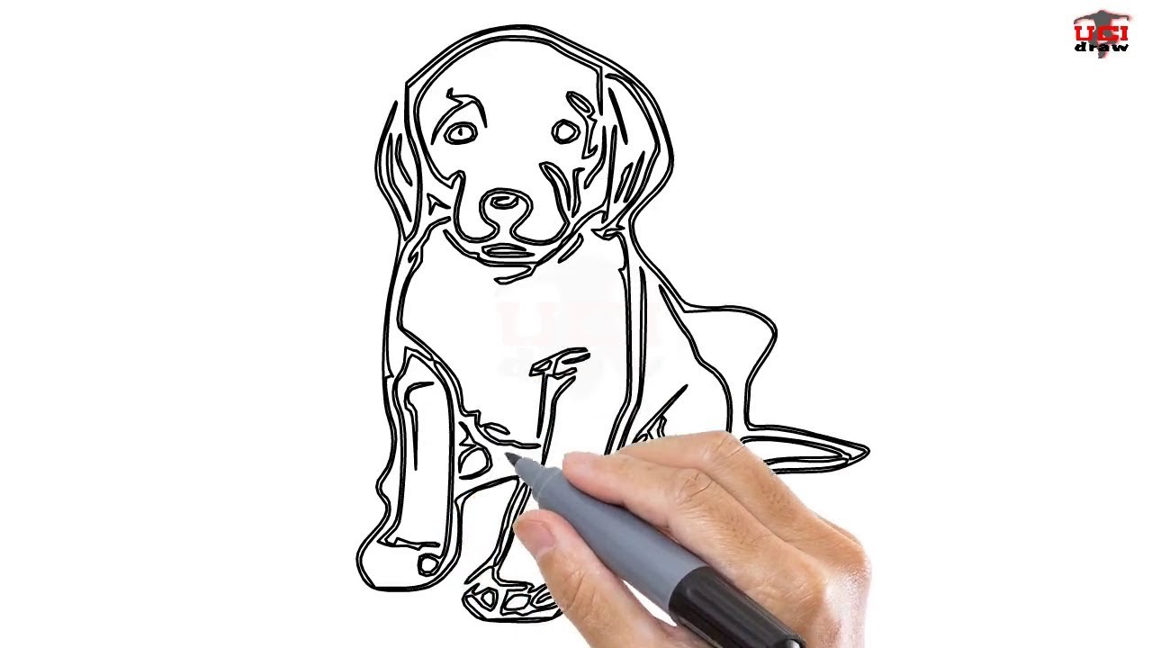 How To Draw A Realistic Dog Easy Step By Step Drawing Tutorials For Kids Ucidraw Youtube
