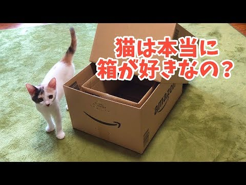 [Verification] Is it true that cats like boxes?
