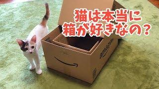 猫は箱好き?ダンボール箱と子猫 thumbnail