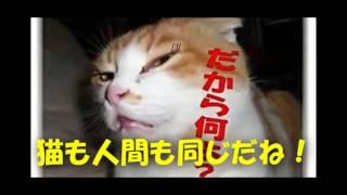 しつけと言われて厳しくされるのは嫌いです。猫だって同じです♪ timein ...
