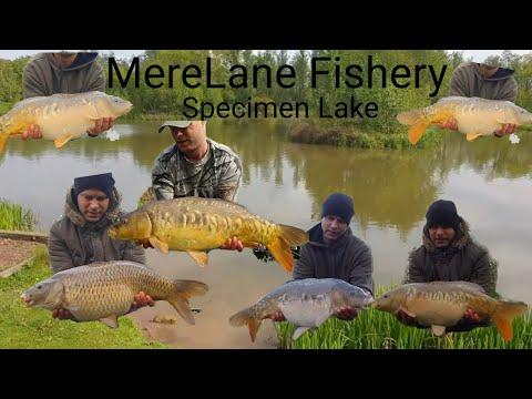 Mere Lane Fishery, 48 Hour Trip!! 2019 ,Carp Fishing