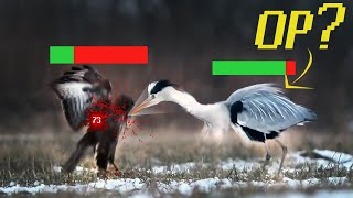 The Bird Tier List
