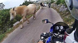 Dwóch świrów i 3000km+ / Motocyklem do Chorwacji 2017! Moto Trip Croatia GoPro