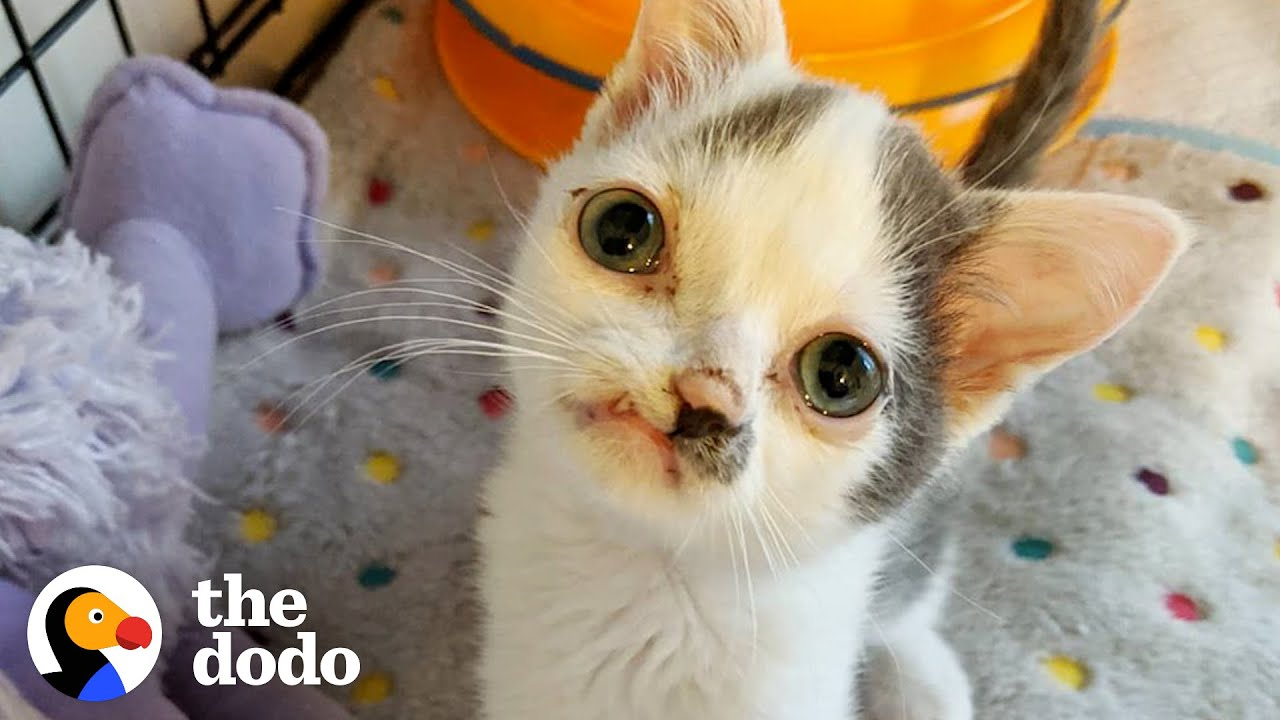 Kitten With Perfectly Imperfect Face Has The Biggest Heart | The Dodo