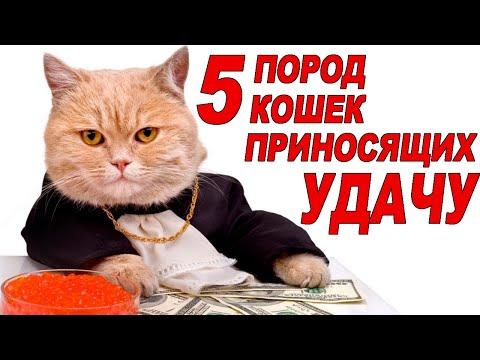ТОП 5 Пород Кошек Которые Приносят Счастье и Удачу