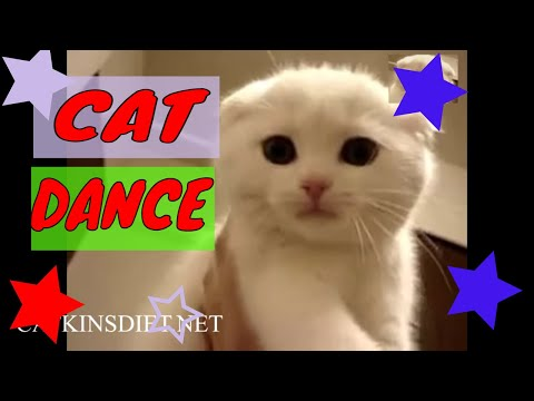 Funny Cat Video – Cat Dance – Cat Song!