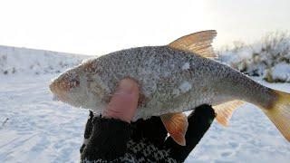 ПРОБИЛИСЬ НА МАЛУЮ РЕКУ, А ТАМ...Зимняя рыбалка 2020-2021, ловля на жерлицы и безмотылку