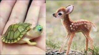 Cutest Baby Animals Videos Compilation - Cutest Animals