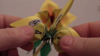 Opening The Origami Bonsai Instant Flower