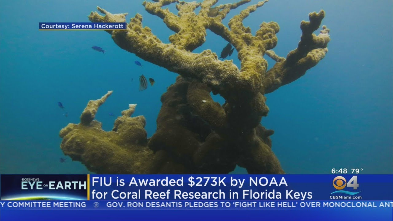 Florida International University Receives Grant To Help In Coral Reef Research