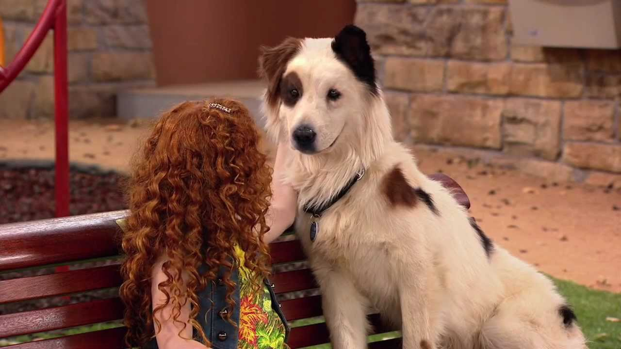 Hund Mit Blog Darsteller
