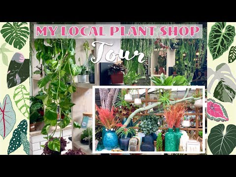 My Local HousePlant Shop! Tropical Decor - Plants 💚🍍🌿🌺