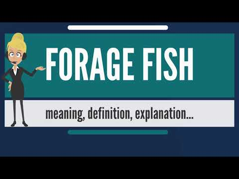 What is FORAGE FISH? What does FORAGE FISH mean? FORAGE FISH meaning, definition & explanation