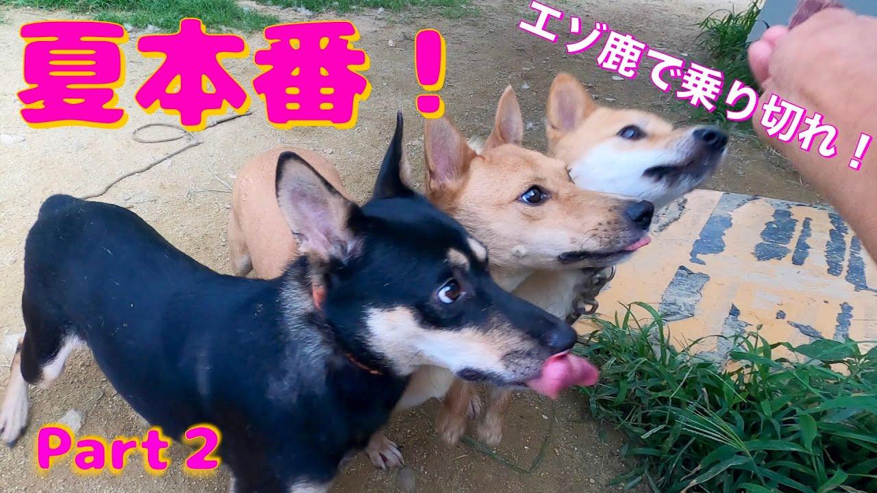 夏本番!エゾ鹿ジャーキー祭り PART2