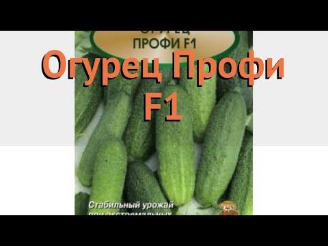Огурец обыкновенный Профи F1 (profi f1) 🌿 огурец Профи F1 обзор: как сажать семена огурца Профи F1