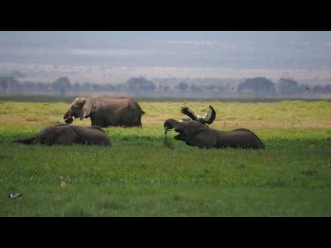 PC298899   Olifanten Amboseli NP