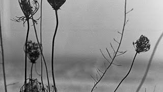 Recondite / Pages