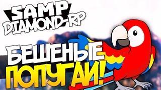 Бешеные Попугаи! - SAMP (DIAMOND-RP) #3