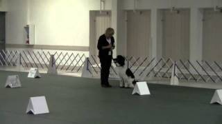 Cantope Poodles Rally Obedience Trial Domino Run #2.wmv
