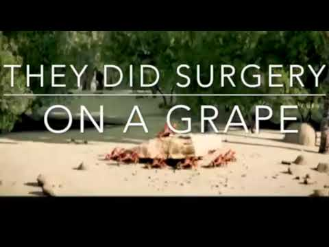 They did surgery on a grape.