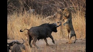THẾ GIỚI ĐỘNG VẬT cuộc chiến của những thú dữ hoang dã