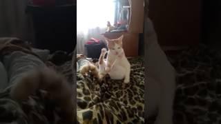 Кот анонист