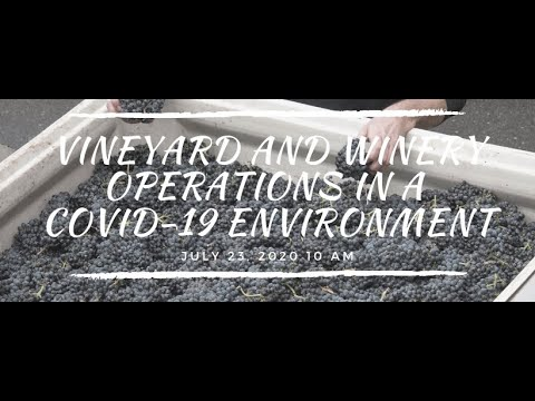 wine article Vineyard And Winery Operations In A Covid19 Environment  July 29 2020