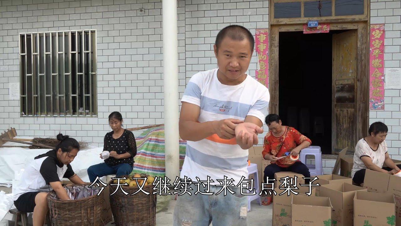 【农村四哥】农村四哥两个摊子收藤梨,连续跑4次送货给快递,中午吃快餐解决