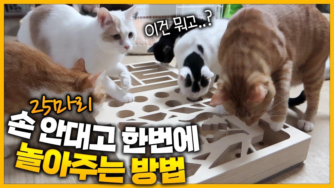 고양이 25마리 손 안대고 한번에 놀아주는 방법!