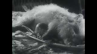 Веселые ребята - Московский кинокомбинат - 1934 год - СССР