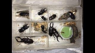 今年も昆虫採集の季節がやってきました。動画内でも告知していますが、...