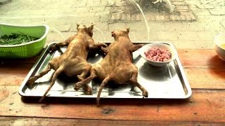 Katzenfleisch:  Verbotene Delikatesse in Vietnam