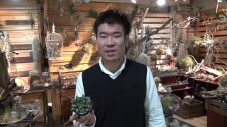 多肉植物 ハオルチアの育てかた