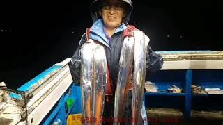 쿨러가득 동양호 칼치조황