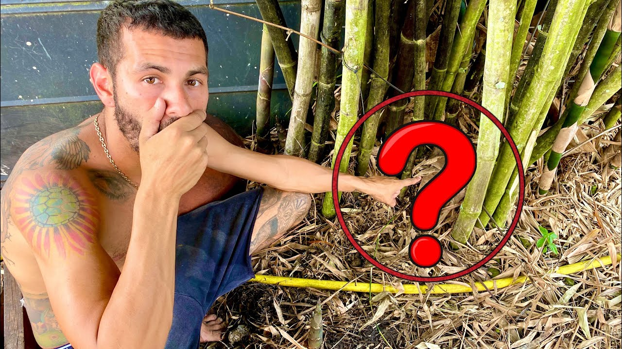 You Won't Believe WHAT WE FOUND LIVING In This HOLE?