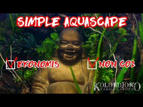 membuat-aquascape-sederhana-tanpa-co2---the-lost-world-#1
