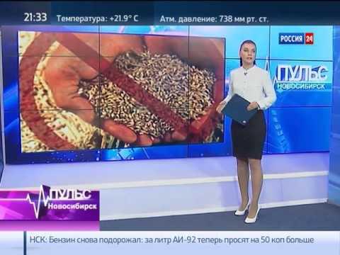 Глава Первомайского района Новосибирска в прямом э