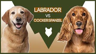 LABRADOR VS COCKER SPANIEL