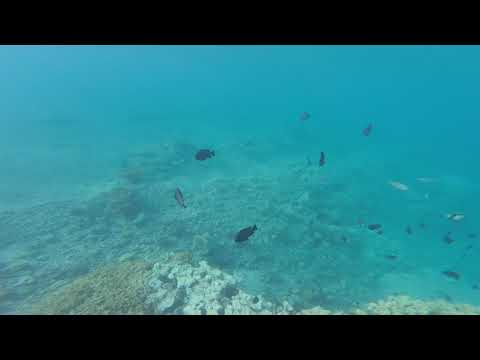 Eilat - December Swimming In Red Sea