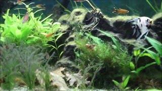 Algen im Aquarium bekämpfen .