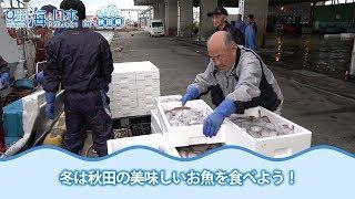 秋田の美味しいお魚はこれからが旬! あなたはお刺身?それとも焼き?お...