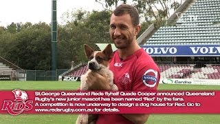 Quade Cooper announced Queensland Rugby