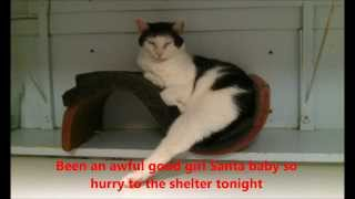 """santa Baby,"" Starring Princess - Whiskers Animal Benevolent League"