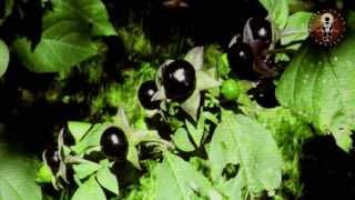 Pflanzen der Götter - Dr. Christian Rätsch & Dr. Claudia Müller-Ebeling