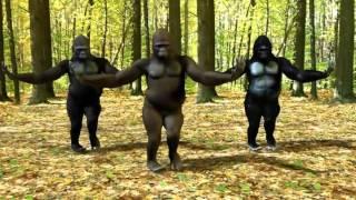 Tuzya Rupacha Chandana(GAAN VAJU DYA ) | Gorillas Style MARATHI