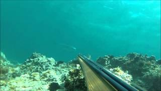 Pecsasub - grossa leccia in 2 mt d'acqua persa...