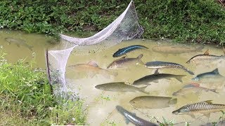 Amazing Fishing at Siem Reap - How To Catch Fish By Hand - Cambodia Traditional Fishing
